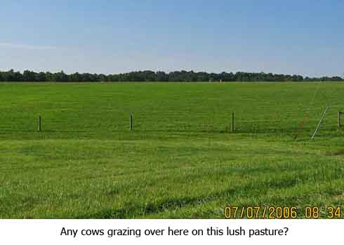 no cows on this lush pasture