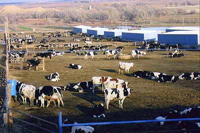 avoiding factory farm foods What are some examples of food healthier than is generally recognised update cancel answer wiki 3 answers avoiding factory farm foods: an eater's guide.