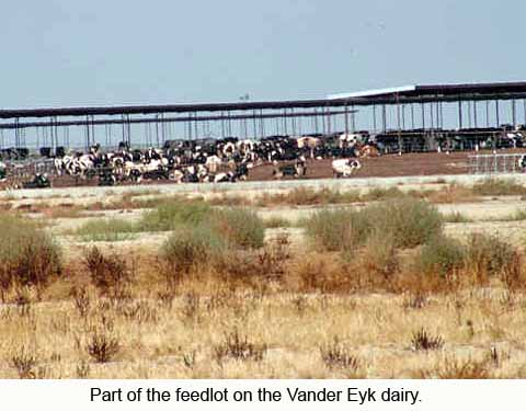 Part of the feedlot