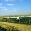 Aurora Colorado Factory Farm