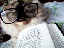 cat-book_
