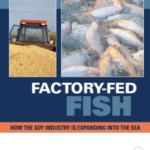 Factory-Fed Fish: How the Soy Industry Is Expanding Into the Sea