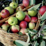 More Home Apple Growers Consider Going Organic