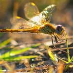 Study Links Insecticide Use to Invertebrate Die-offs