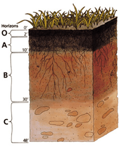 Soil_profile