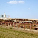 US Study Links Drug Resistant Bacteria With Intensive Farms