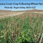 Cover Crops Survey Analysis