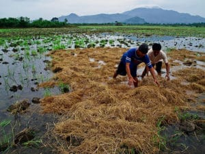 640px-Rice_farmers_at_work_in_the_Philippines
