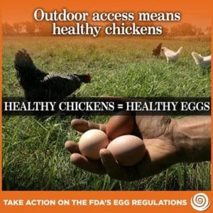 outdoor access means healthy chickens