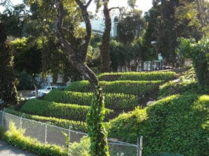 1024px-Hayes-Valley-Farm_by_Zoey-Kroll_fava-hillside
