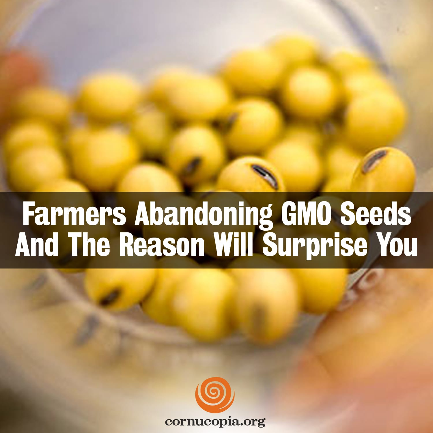 genetically modified seeds vs organic seeds Organic seed should be free of genetically engineered (ge) dna, because  in  response to the threat, the organic seed growers and trade.
