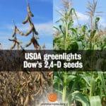 USDA Greenlights Dow's 2,4-D Seeds