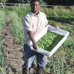 Funding Restored for Beginning Farmer Training Programs