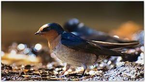 The Best Birds For Your Garden Cornucopia Institute