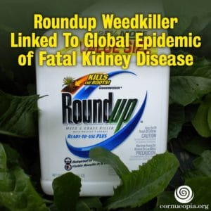 Glyphosate KidneyDisease
