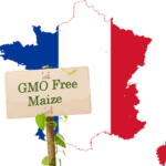French Ban on GMO Maize Cultivation Gets Final Approval