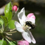 California Stung by Lawsuit to Protect Bees