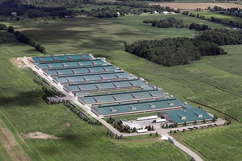 The scale of this operation can only be appreciated if you note the semi-trailers in the forefront of the photo.  These two-story houses likely contain over 100,000 birds using aviary systems.  The farm itself is licensed for over 1 million.  Screen porches on the side of the buildings are visible.