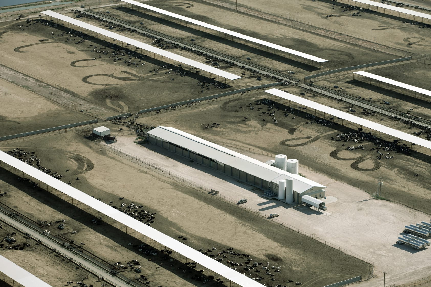 Investigation Factory Farms Producing Massive Quantities Of Organic Milk And Eggs