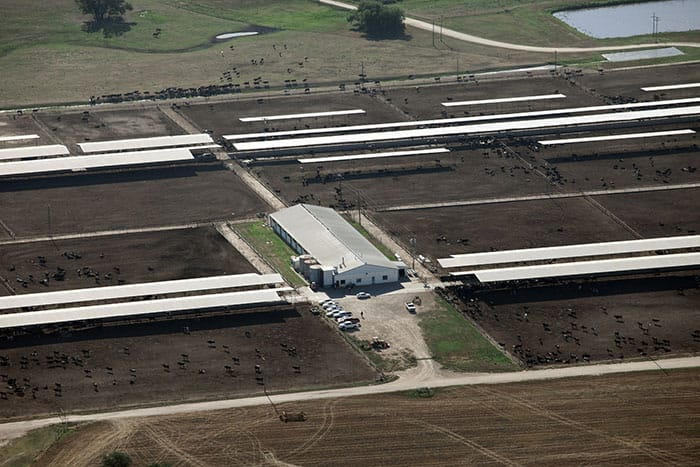 Close-up of the largest feedlot.