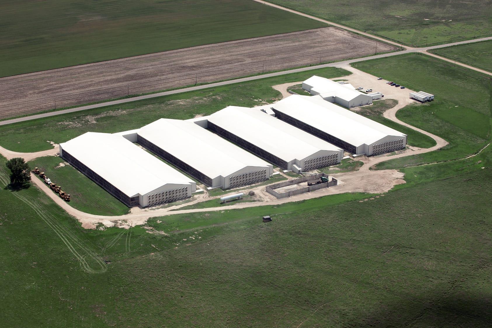 against factory farming essay
