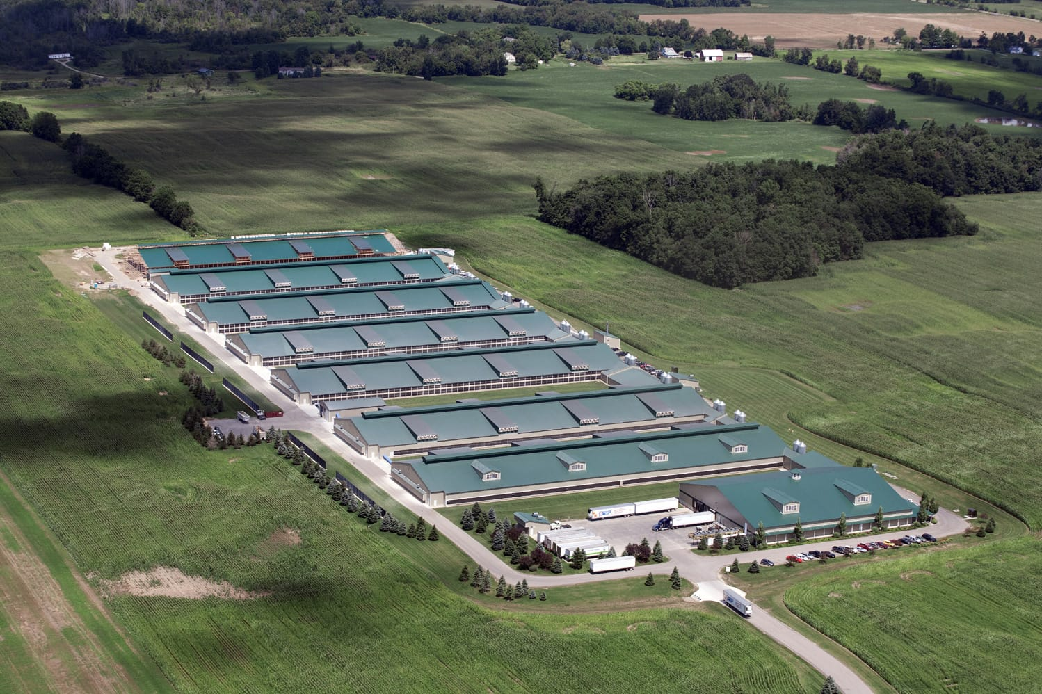 Investigation Factory Farms Producing Massive