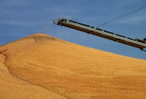 Arkansas Farmers Say Syngenta Tainted Grain Supply To