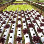 National Organic Program Addresses New Hydroponic/Aquaponic Task Force