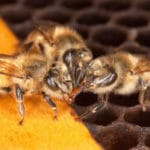 Bees Are Dying Off — But There's a Surprisingly Simple, Completely Uncontroversial Way to Save Them