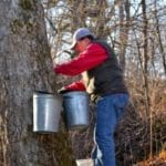 The Sweet Truth About Maple Syrup