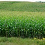 Environmental, Farmer, and Consumer Groups Demand Higher Standards for Genetically Engineered (GE) Crop Regulations