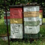In Search of Hive Parking: Pairing Minnesota Beekeepers with Organic Farms