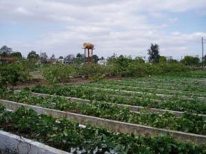 Agriculture Organic Logo