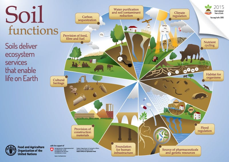 FAO-Infographic-IYS2015-soilfunctions-en