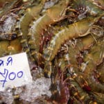 Warning: After Reading This, You May Never Eat Shrimp from Thailand Again