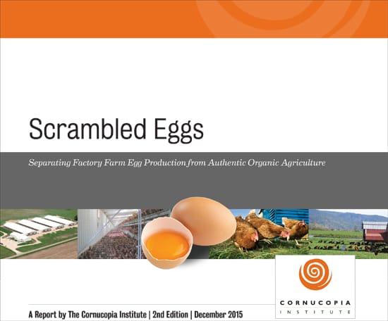 scrambled-eggs-cover2015