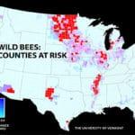Wild Bee Decline Threatens U.S. Crop Production