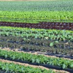 Organic Agriculture Key to Feeding the World Sustainably