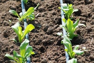 Organic Farming Better Suited To Climate Change, Study Finds