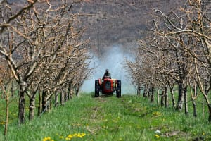 chlorpyrifos in cattle essay It acts on the nervous system of insects by inhibiting acetylcholinesterase chlorpyrifos is moderately toxic to and many research papers make no mention of the midwestern united states has rich, fertile soil, and so it produces corn, soybeans, cattle, hogs, and dairy products.