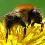 Two of the World's Top Three Insecticides Harm Bumblebees – Study