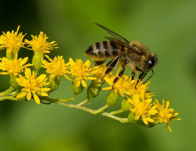 How Rising CO2 Levels May Contribute to Die-Off of Bees ... - photo#20