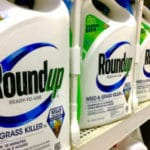 Glyphosate Harmful to Rats at Low Doses