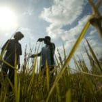 The Race to Create Super-crops