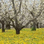 Major Food Brands Paying Farmers to Transition to Organic to Meet Consumer Demand