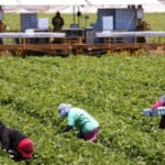 Children of Pregnant Women Exposed to Pesticides Have Lower IQs