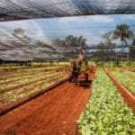 Cuba: Regional Leader in Sustainable Agriculture