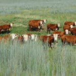 Enroll Your Vulnerable Grasslands by December 16