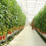 Organic is Soil