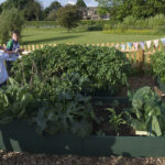 School Gardens Growing Test Scores Alongside Greens